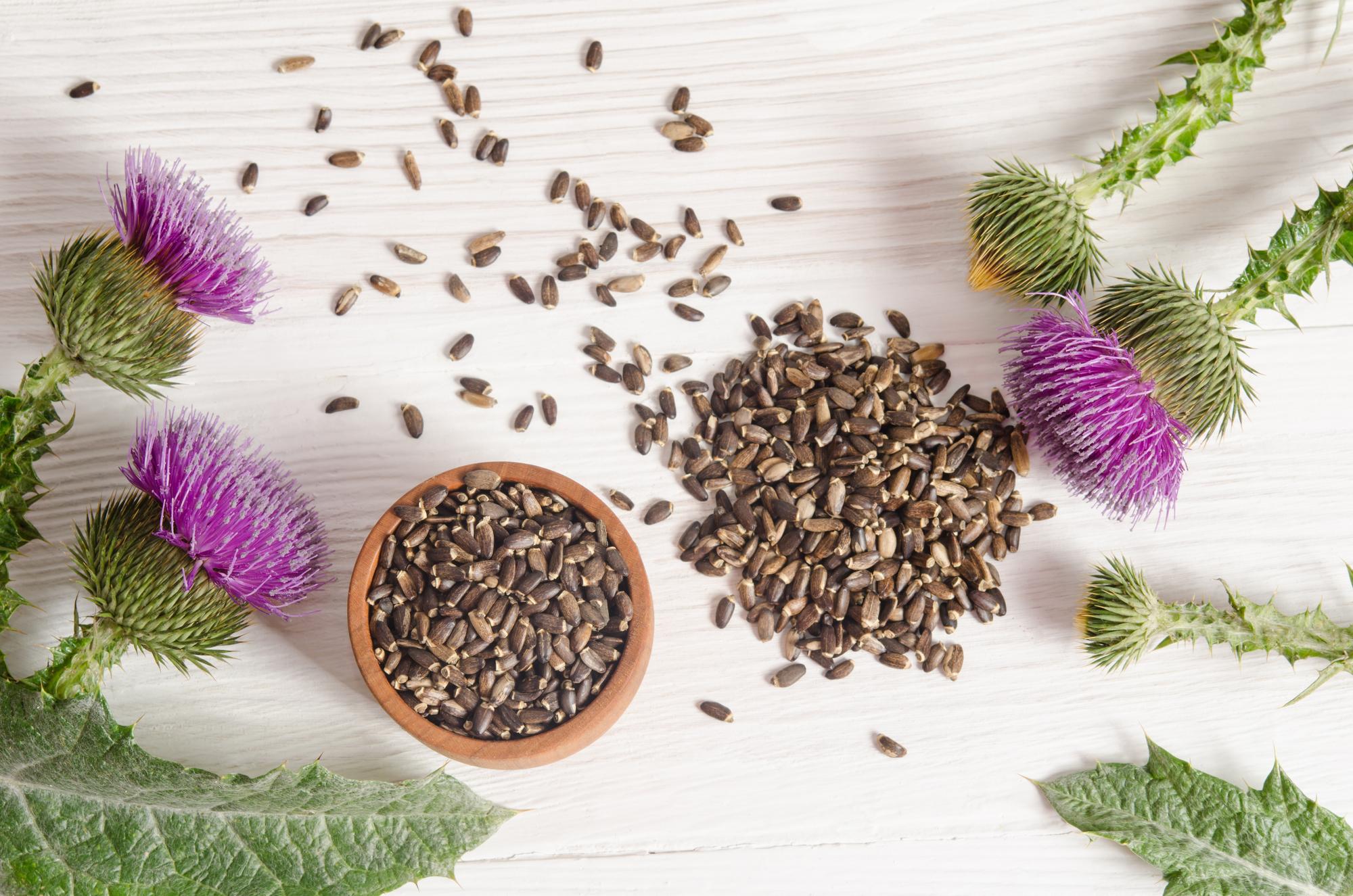 Mariendistel: 6 Wirkungen & 2 Verwendungen der wirkungsvollen Heilpflanze