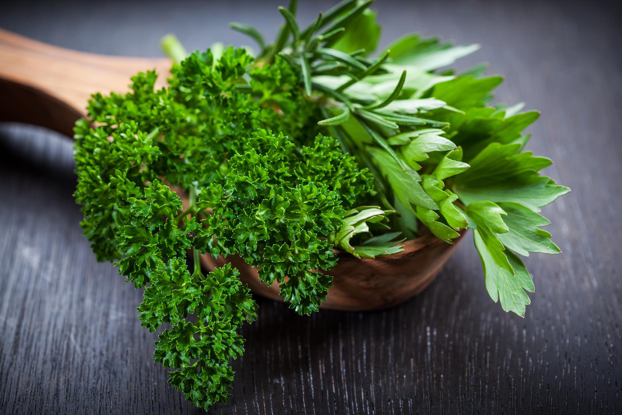 Petersilie: 5 Wirkungen, 3 Risiken + Tipps zum Selbstanbau