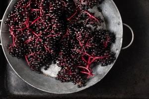 Holunderbeeren-Verarbeiten