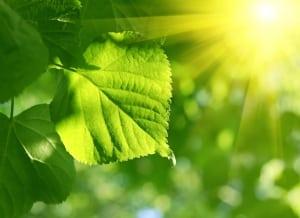Vitamin-K-Photosynthese