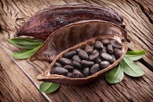 kakaobutter-kakaobohnen